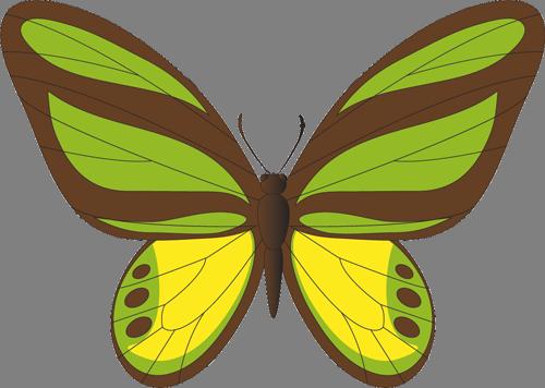 Наклейка «Жёлто-зелёная бабочка»Насекомые<br><br>