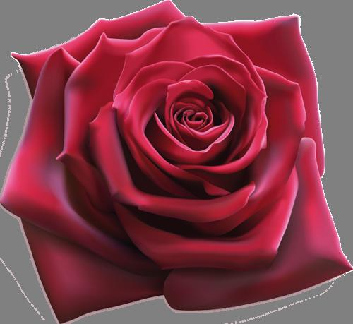 Наклейка «Пурпурная роза»Цветы<br><br>