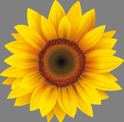 Наклейка «Ромашка с жёлтыми лепестками»Цветы<br>Цветная интерьерная наклейка на виниле. Яркая и красивая! Можно сделать любой размер. Трехслойная надежная упаковка. Доставим в любую точку России.<br>