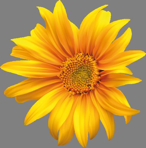 Наклейка «Жёлтая ромашка»Цветы<br>Цветная интерьерная наклейка на виниле. Яркая и красивая! Можно сделать любой размер. Трехслойная надежная упаковка. Доставим в любую точку России.<br>