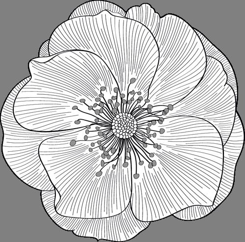 Наклейка «Белый цветок в графике»Цветы<br><br>