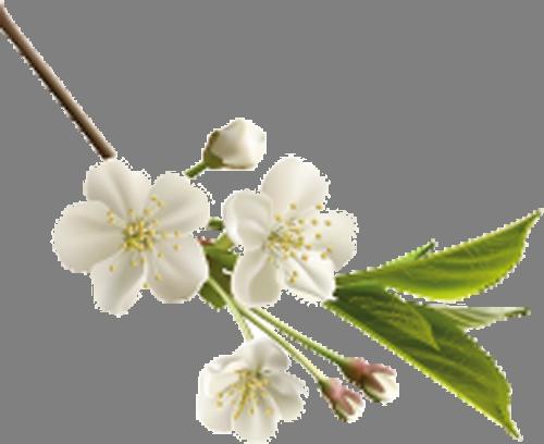 Наклейка «Весенняя ветвь»Цветы<br><br>