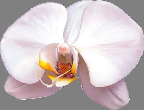 Наклейка «Белые лепестки»Цветы<br><br>