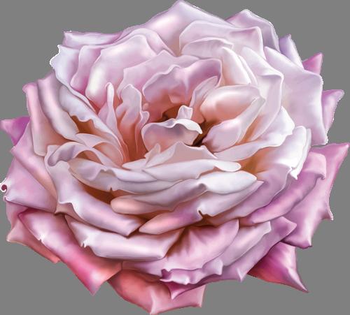 Наклейка «Белая роза»Цветы<br><br>