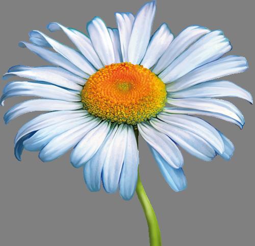 Наклейка «Ромашка»Цветы<br><br>