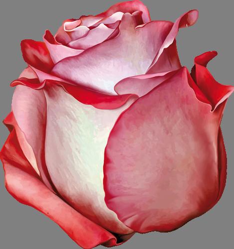 Наклейка «Красная роза»Цветы<br><br>
