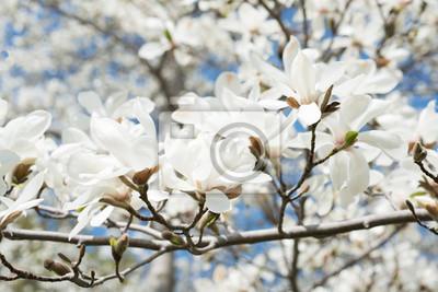 """Постер Цветы """"Постер 100331504"""", 30x20 см, на бумаге от Artwall"""