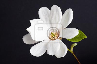 """Постер Цветы """"Постер 108209904"""", 30x20 см, на бумаге от Artwall"""