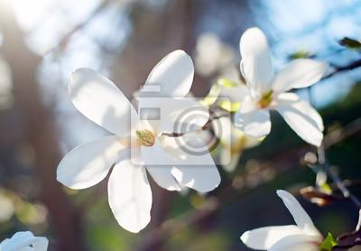 """Постер Цветы """"Постер 108818958"""", 29x20 см, на бумаге от Artwall"""