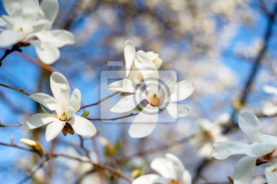 """Постер Цветы """"Постер 108818993"""", 30x20 см, на бумаге от Artwall"""