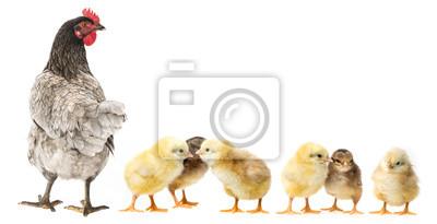 """Постер Птицы """"Постер 119165665"""", 39x20 см, на бумаге от Artwall"""
