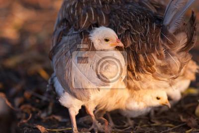 """Постер Птицы """"Постер 122498448"""", 30x20 см, на бумаге от Artwall"""