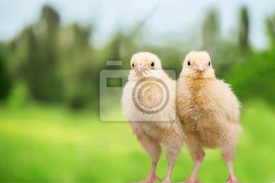 """Постер Птицы """"Постер 122864442"""", 30x20 см, на бумаге от Artwall"""