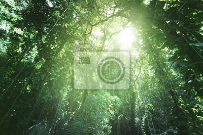"Постер Природа ""Постер 137051527"", 30x20 см, на бумаге от Artwall"