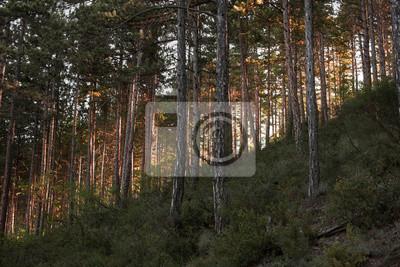 "Постер Природа ""Постер 141640938"", 30x20 см, на бумаге от Artwall"
