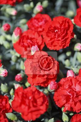"""Постер Цветы """"Постер 17176807"""", 20x30 см, на бумаге от Artwall"""