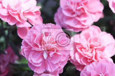 """Постер Цветы """"Постер 17177058"""", 30x20 см, на бумаге от Artwall"""