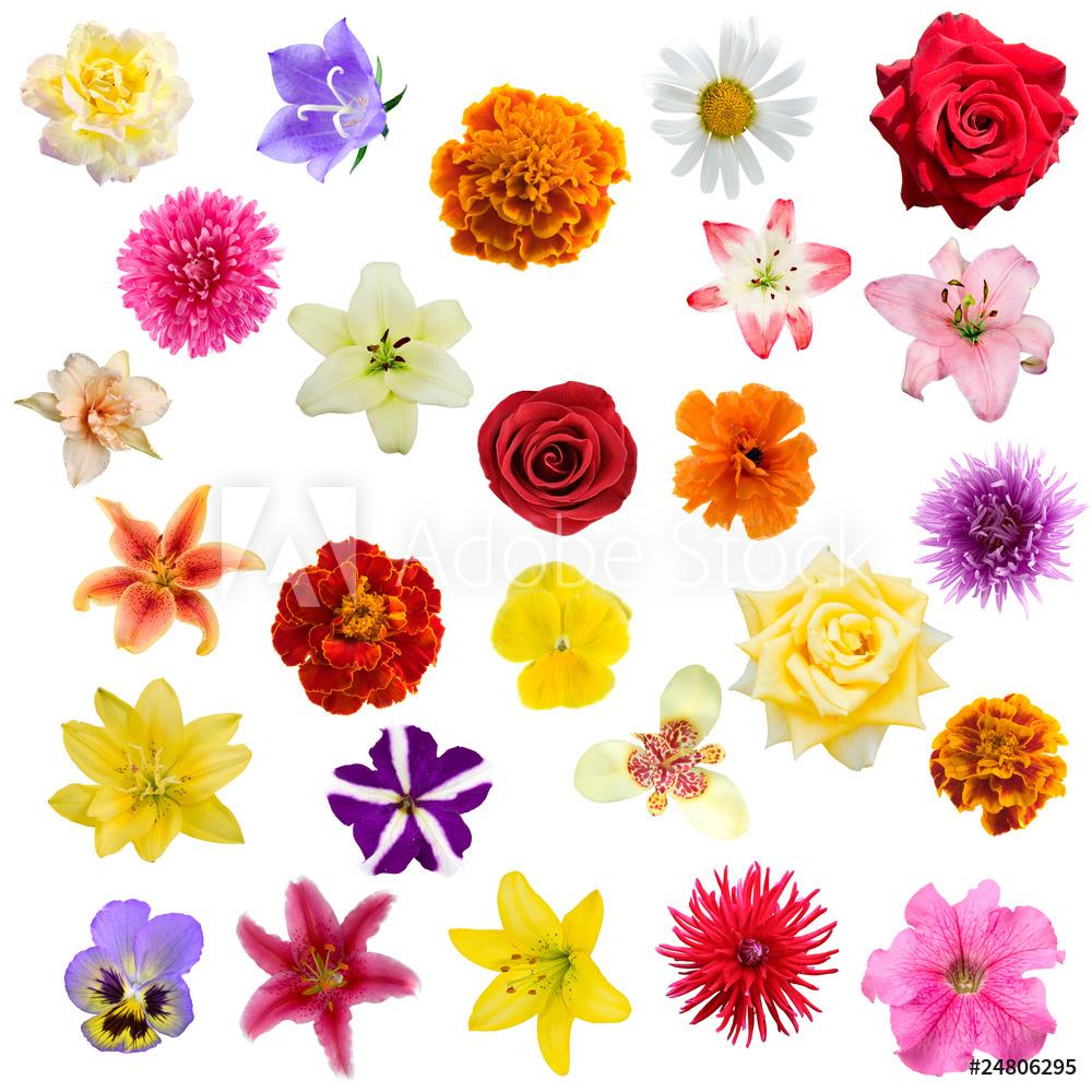 """Постер Цветы """"Постер 24806295-177"""", 20x20 см, на бумаге от Artwall"""