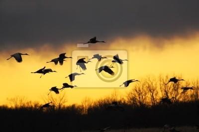 """Постер Птицы """"Постер 25505674"""", 30x20 см, на бумаге от Artwall"""