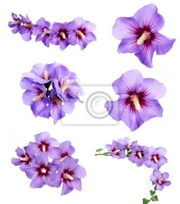 """Постер Цветы """"Постер 26070070"""", 20x23 см, на бумаге от Artwall"""