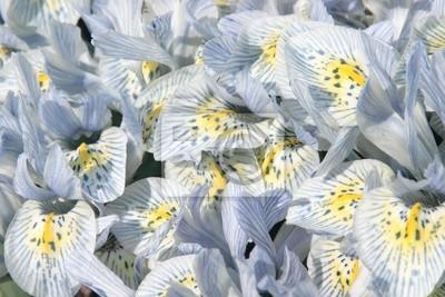 """Постер Цветы """"Постер 2654189"""", 30x20 см, на бумаге от Artwall"""