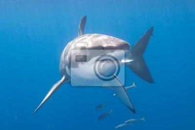 """Постер Подводный мир """"Постер 29365989"""", 30x20 см, на бумаге от Artwall"""