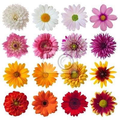 """Постер Цветы """"Постер 29977989"""", 20x20 см, на бумаге от Artwall"""