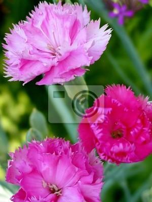 """Постер Цветы """"Постер 309034"""", 20x27 см, на бумаге от Artwall"""