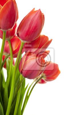 """Постер Цветы """"Постер 32181855"""", 20x30 см, на бумаге от Artwall"""