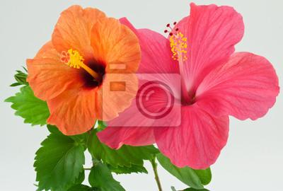 """Постер Цветы """"Постер 33428533"""", 30x20 см, на бумаге от Artwall"""