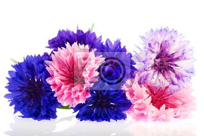 """Постер Цветы """"Постер 33757543"""", 30x20 см, на бумаге от Artwall"""