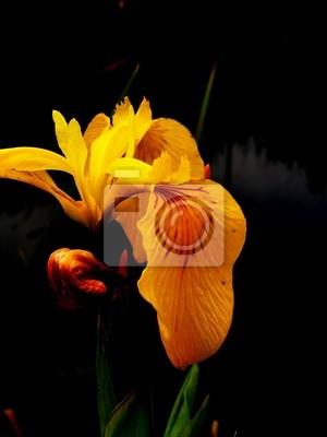 """Постер Цветы """"Постер 337985"""", 20x27 см, на бумаге от Artwall"""