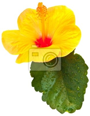 """Постер Цветы """"Постер 34994906"""", 20x26 см, на бумаге от Artwall"""
