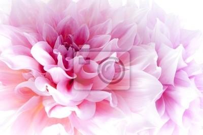 """Постер Цветы """"Постер 35123840"""", 30x20 см, на бумаге от Artwall"""