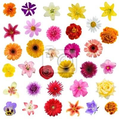 """Постер Цветы """"Постер 35653211-177"""", 20x20 см, на бумаге от Artwall"""