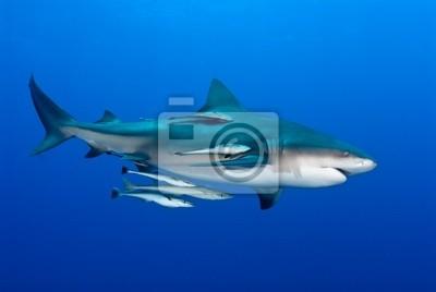 """Постер Подводный мир """"Постер 36605674"""", 30x20 см, на бумаге от Artwall"""