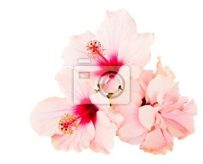"""Постер Цветы """"Постер 38434224"""", 25x20 см, на бумаге от Artwall"""