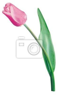 """Постер Цветы """"Постер 38440775"""", 20x32 см, на бумаге от Artwall"""