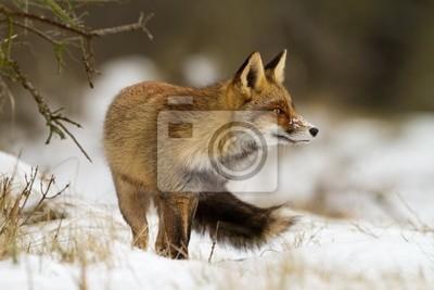 """Постер Животные """"Постер 38849671"""", 30x20 см, на бумаге от Artwall"""