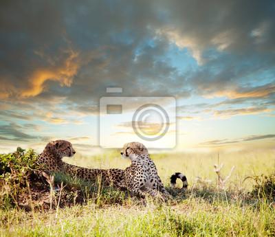 """Постер Животные """"Постер 39453718"""", 23x20 см, на бумаге от Artwall"""