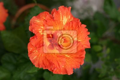 """Постер Цветы """"Постер 41032417"""", 30x20 см, на бумаге от Artwall"""