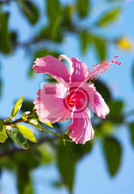 """Постер Цветы """"Постер 41049474"""", 20x29 см, на бумаге от Artwall"""