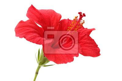 """Постер Цветы """"Постер 42536355"""", 30x20 см, на бумаге от Artwall"""