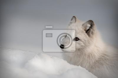 """Постер Животные """"Постер 43062089"""", 30x20 см, на бумаге от Artwall"""