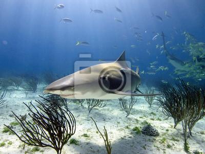 """Постер Подводный мир """"Постер 43119055"""", 27x20 см, на бумаге от Artwall"""