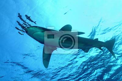 """Постер Подводный мир """"Постер 43126995"""", 30x20 см, на бумаге от Artwall"""