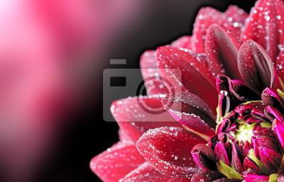 """Постер Цветы """"Постер 43144625"""", 31x20 см, на бумаге от Artwall"""