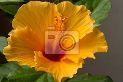 """Постер Цветы """"Постер 43145546"""", 30x20 см, на бумаге от Artwall"""
