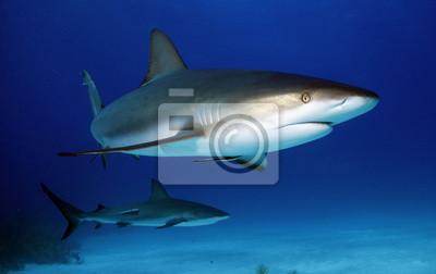 """Постер Подводный мир """"Постер 43173516"""", 32x20 см, на бумаге от Artwall"""