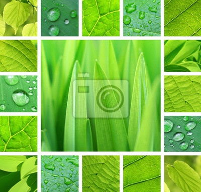 "Постер Природа ""Постер 44336071"", 21x20 см, на бумаге от Artwall"